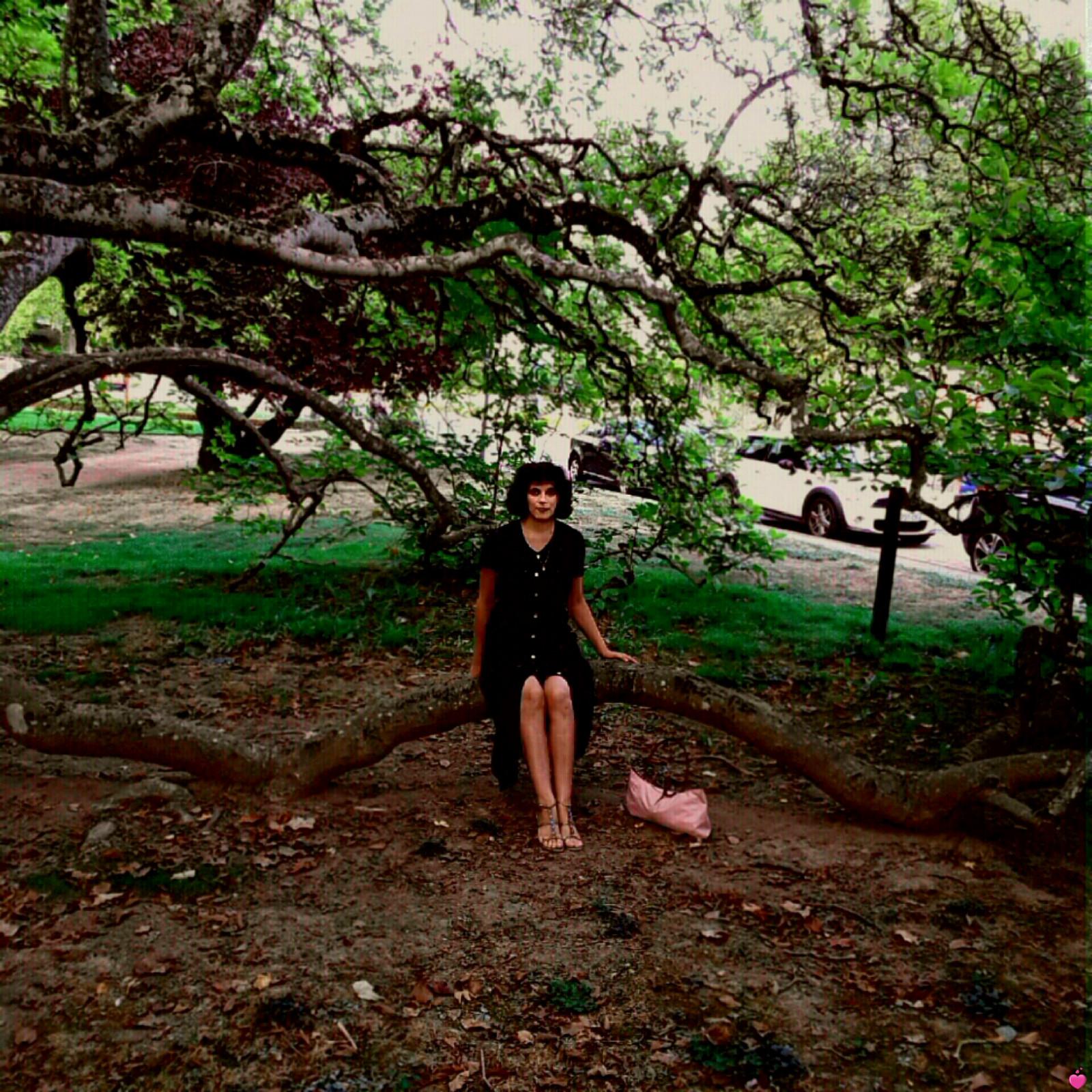 <p>Magnolia des Thermes de Néris-les-Bains ⛲</p>